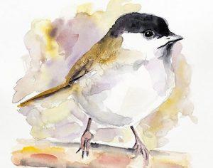 Chickadee in watercolour
